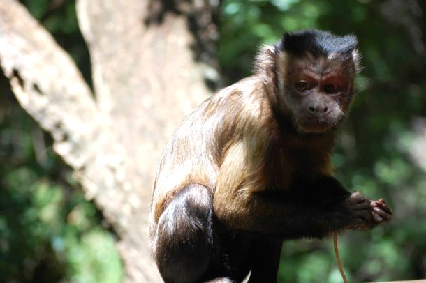 South African monkey, sanctuary