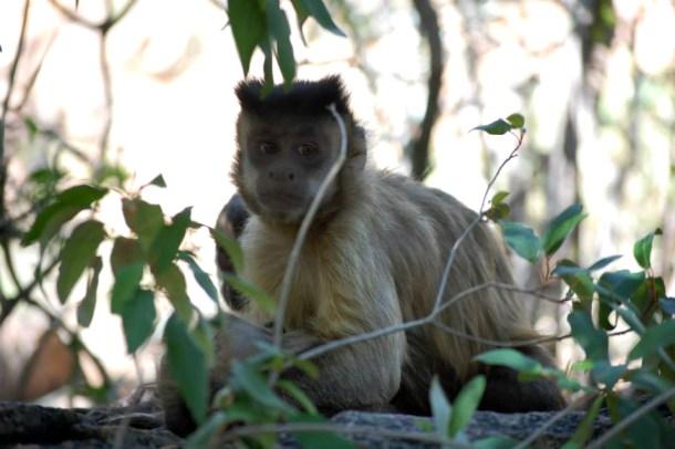 Monkey sanctuary, South Africa
