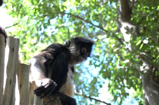 South Africa Monkey sanctuary