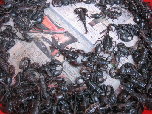 scorpions for lunch?