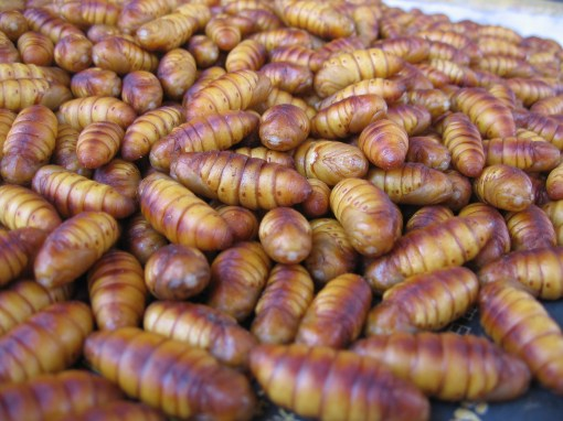insect pupae - i wonder how they cook this