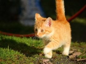 cat-1064225_960_720