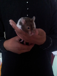 Hammy - Pet Sitting