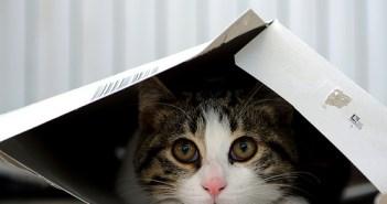 kitten fear