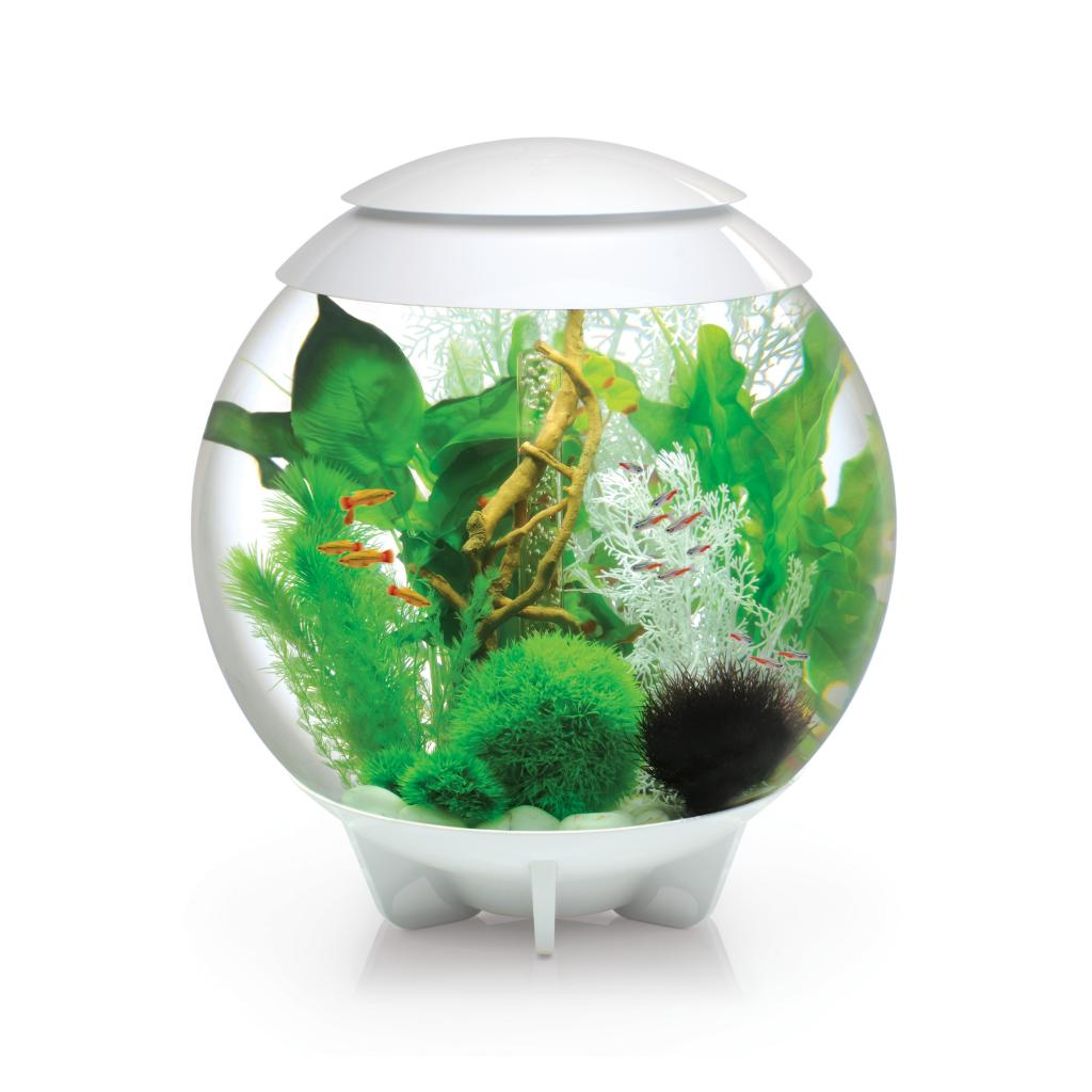 Décoration Aquarium Pour Combattant Biorb Halo 60 Litre Aquarium With Moonlight Led Lighting