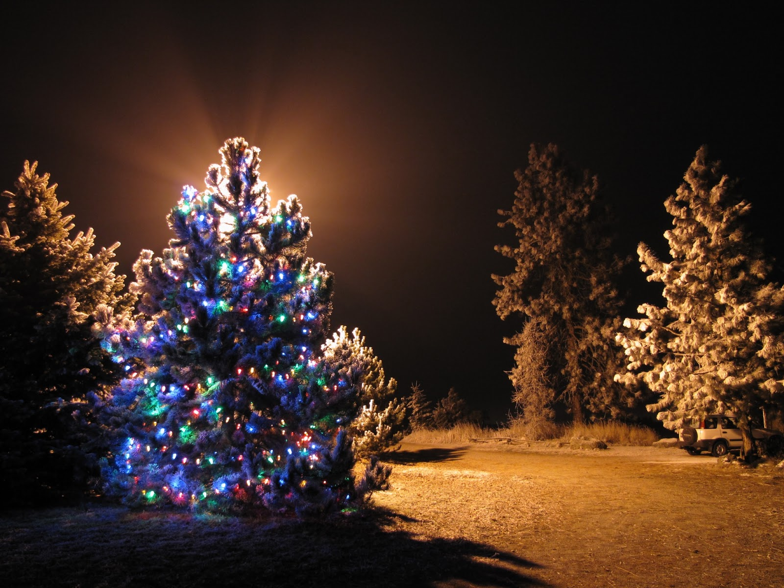 christmas light trees outdoor 10 tips for buyers saveenlarge