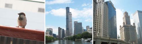 ChicagoArchitecturalTour-thumb
