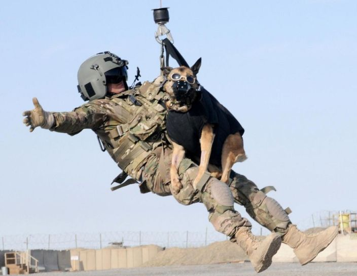 Military Working Dogs Now Guaranteed A Trip Home With Their Handlers Maiden On The Midway