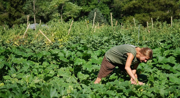 Farmer Mo Moodie of Arcadia. (Photo courtesy of Arcadia)