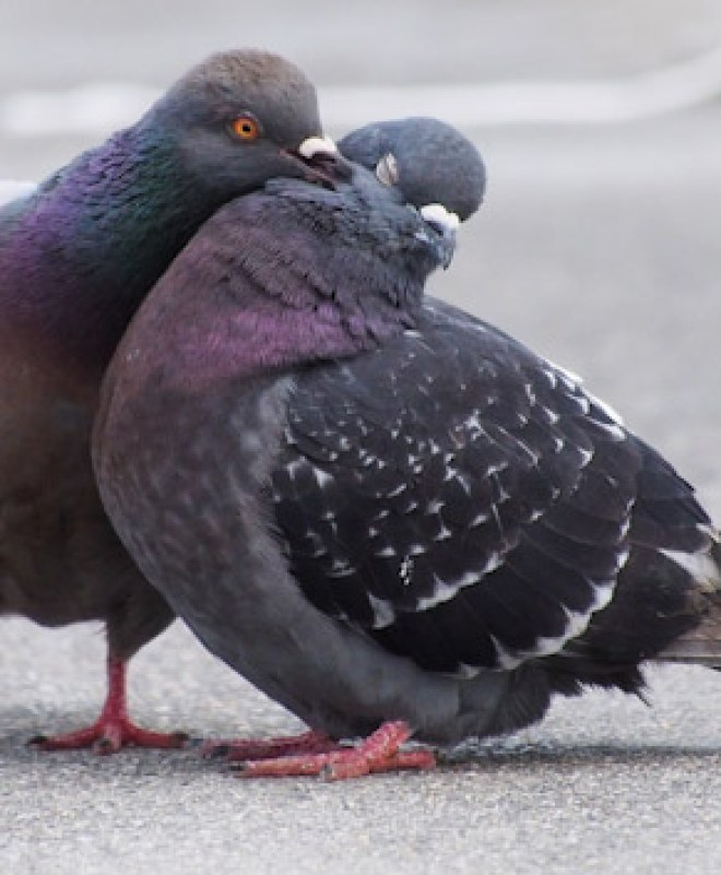Pigeon in Washington Square Park Has Zero Fucking Respect For Boundaries