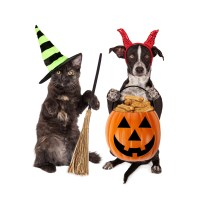 Halloween Costume Contest ~ Wateree Animal Hospital