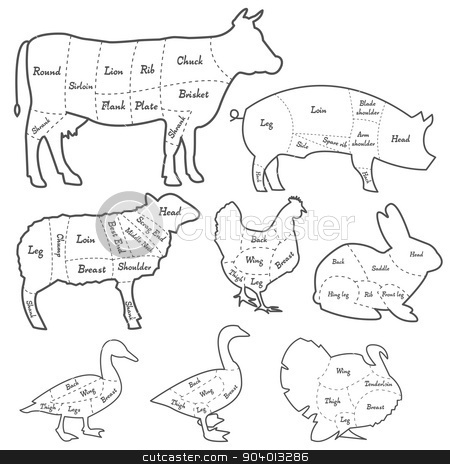 Vintage outline diagram meal cutting of domestic animals stock vector