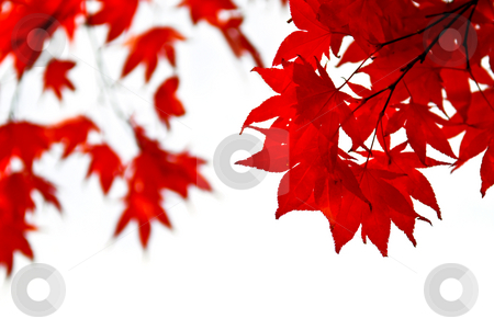 Windows Wallpaper Fall Fall Leaves Background Stock Photo