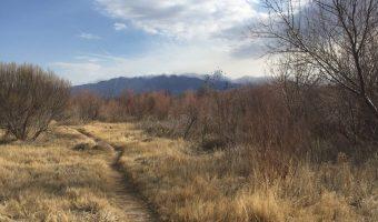 Albuquerque Travel Guide for Vegans & Introverts