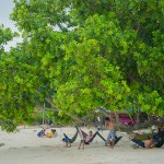 Coco beach (3)