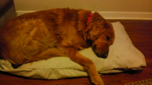 Wayward Living Tip: Sew Your Own Dog Beds (4/4)