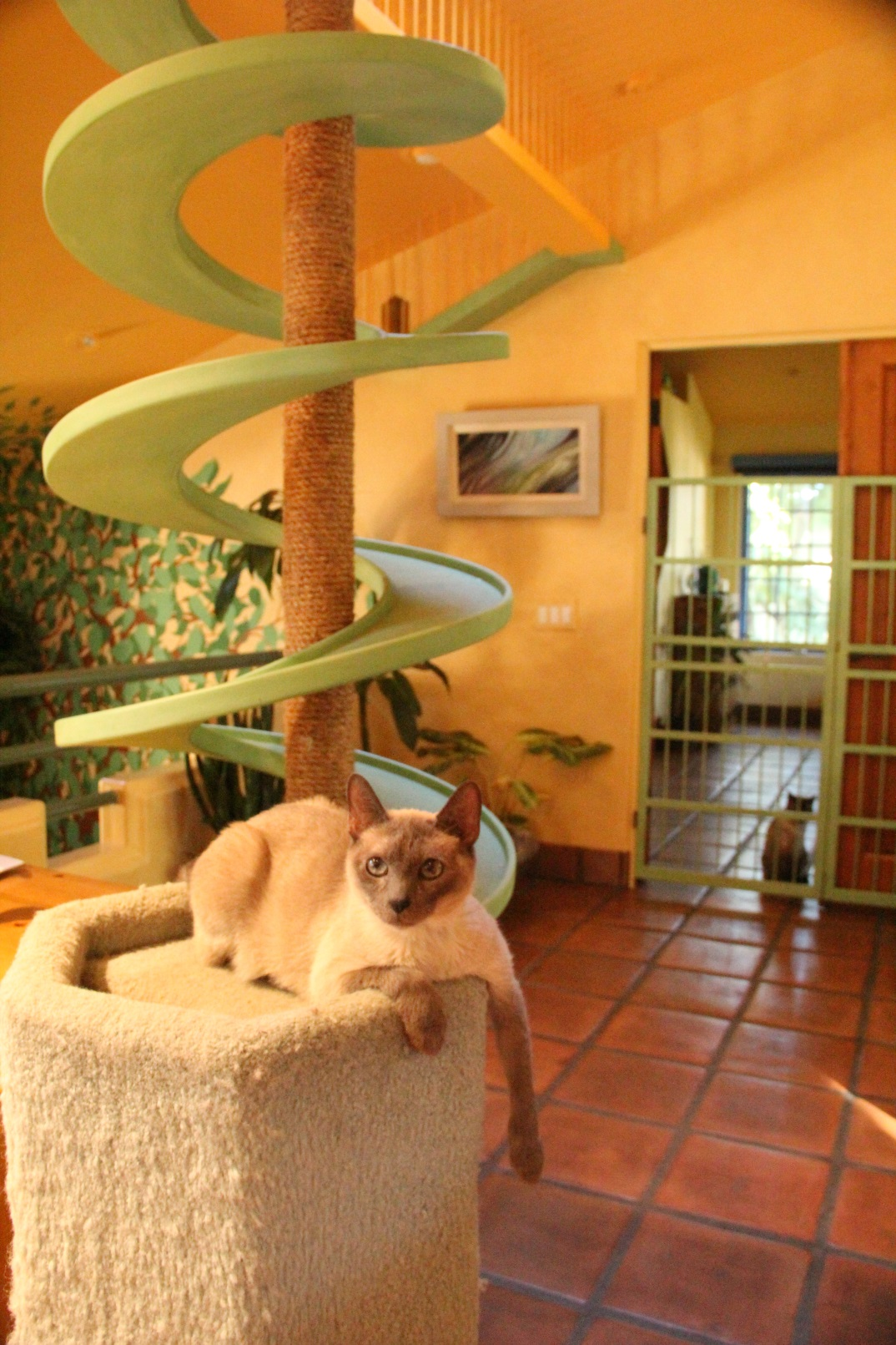 Cat Tree Houses Indoor Cat Furniture Cat Climbing Structures