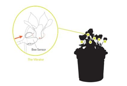 0aasebeesensor9.jpg