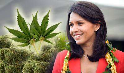 Decriminalize Marijuana: Congresswoman Tulsi Gabbard Proposes New Bill