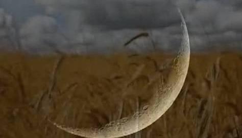 Aviv / Abib, Abib Barley, Aviv Barley, Hebrew Calendar, Hebrew New Year, Hebrew Roots, Jewish Calendar, Sighted New Moon, Silver New Moon, Yehovah's Holy Days, Aviv new moon