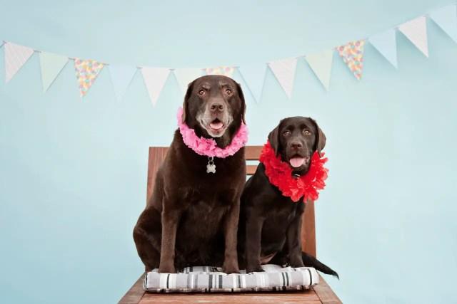 Lola&Lucy by Jenny Karlsson
