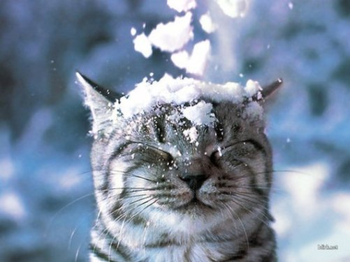Cat with snow falling on head