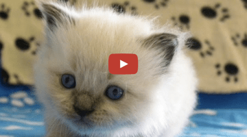 Kitten Time Lapse – The First 50 Days!