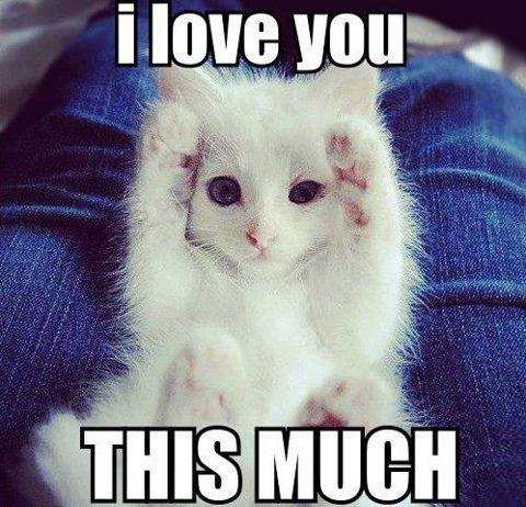 love_kitten-f510f836d408c4e5fdbdba096c05f1ac