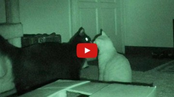 VIDEO: What Cats Do at Night!