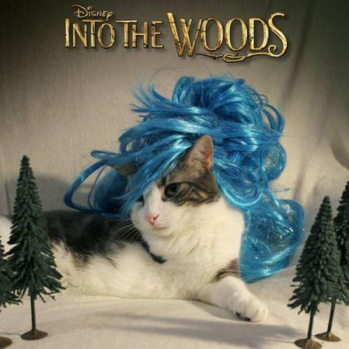 into the woods cat