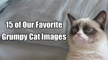 15 of Our Favorite Grumpy Cat Images