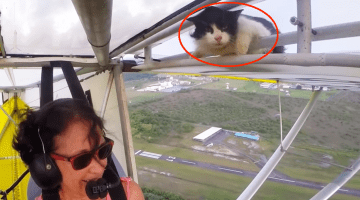 See Why You Should Always Check Your Plane for Stowaway Cats
