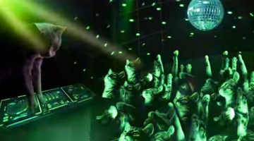 You'll Never Believe What Happens When Cats Go Clubbing!