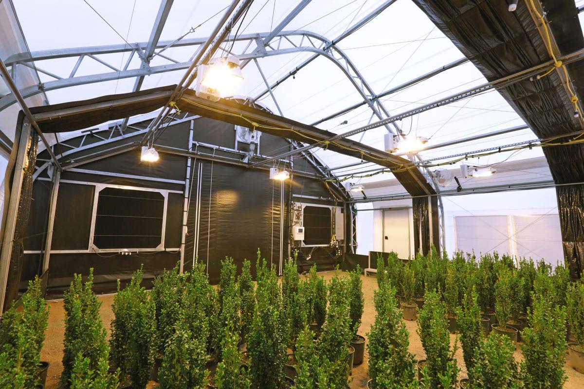 Cannabis Greenhouses Weatherport
