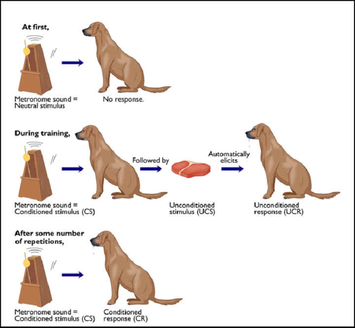 AI lecture - examples of classical conditioning