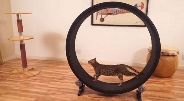 rueda_de_ejercicios_para_gatos_-_one_fast_cat_1