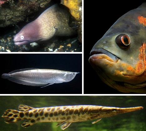 Strange Fish 12 Unique Freshwater Aquarium Species - WebEcoist