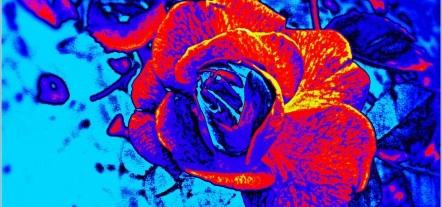 Neon Animal Print Wallpaper 50 Incre 237 Bles Fondos De Pantalla Abstractos Y Psicod 233 Licos