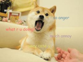 Doge Piss
