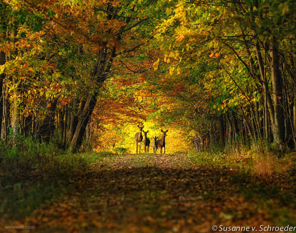Fall Free Wallpaper Cave Nature Picture Forest 21 Full Image