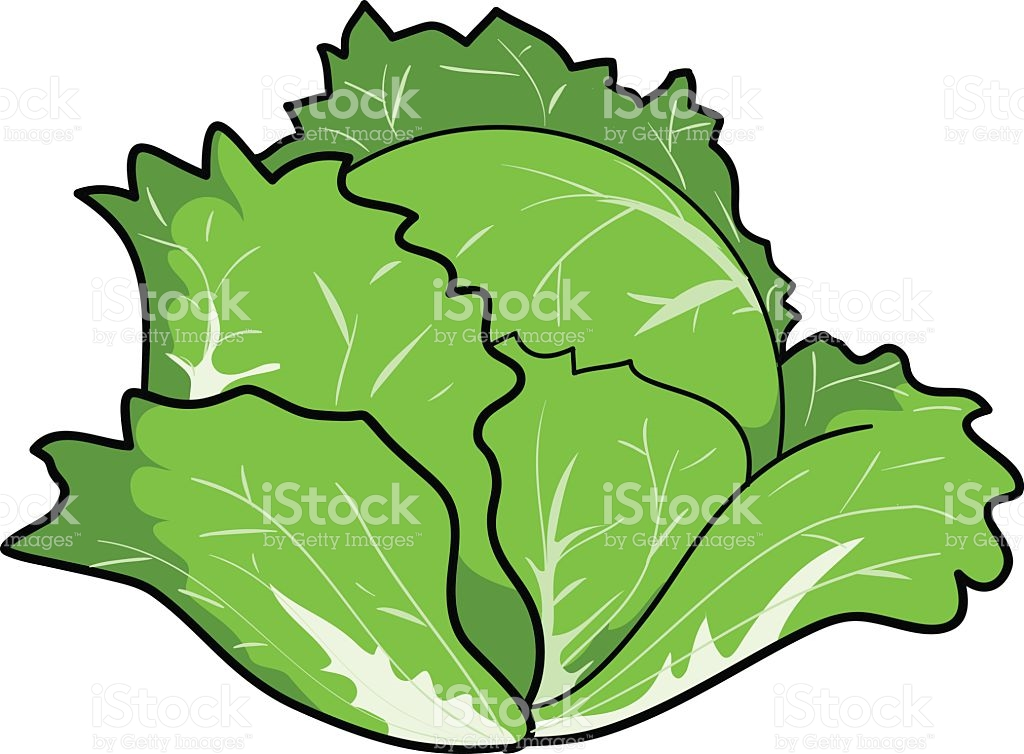 Cabbage Clipart Petchay Cabbage Petchay Transparent Free