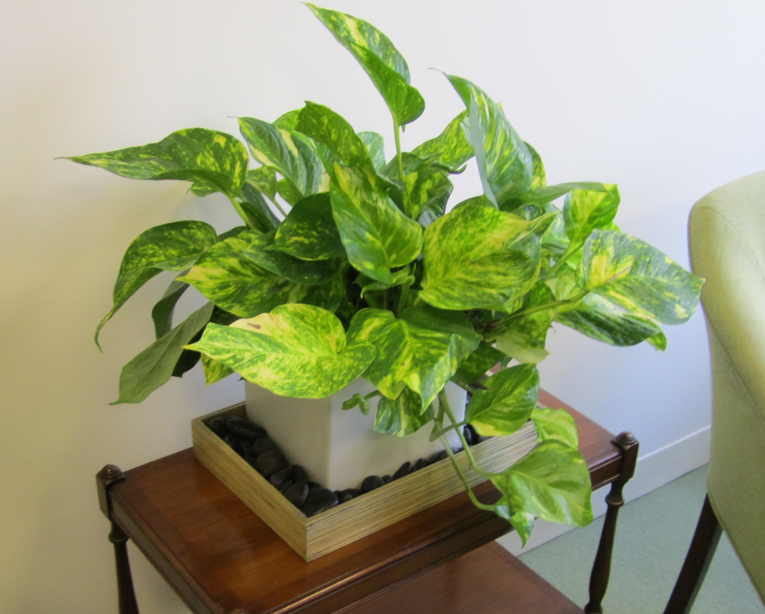 Nice Office Plants Best And Easy To Plant Houseplants That Improve Indoor Air