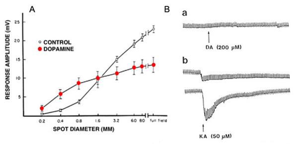 S-Potentials and Horizontal Cells by Ido Perlman, Helga Kolb and
