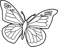 Blue Black Butterfly Coloring Page   Wecoloringpage.com