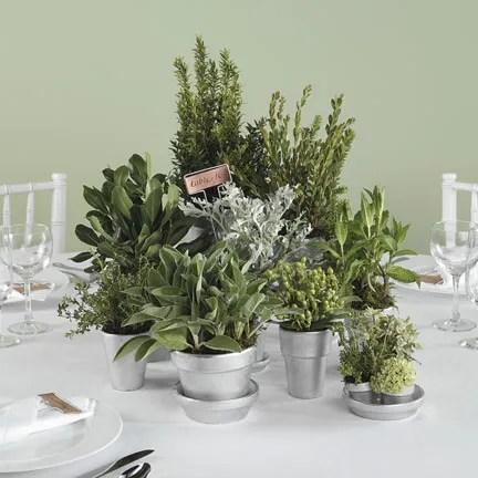 Centerpieces-herbs