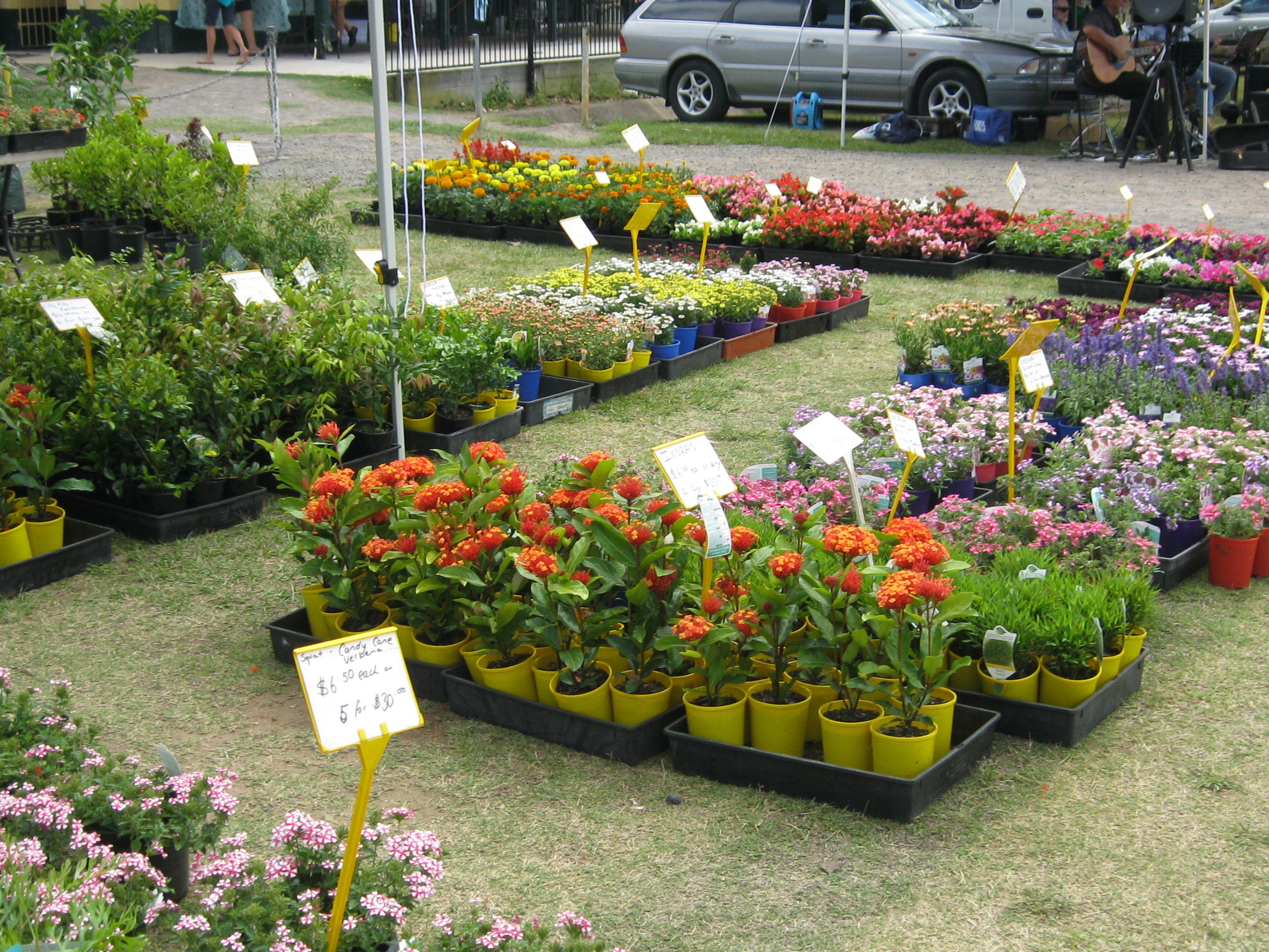 Buy Plants Sydney Where To Buy Plants And Pots On The Sunshine Coast