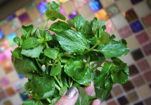 Fresh Mint 2 Having a Dinner Party? Tips You Need to Know...