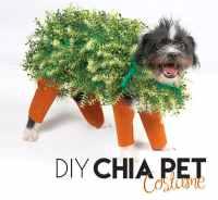 DIY Halloween: Chia Pet Dog Costume | we heart this