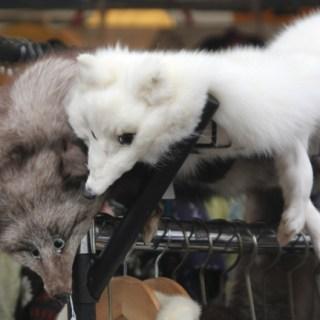 Is it OK to wear vintage fur?