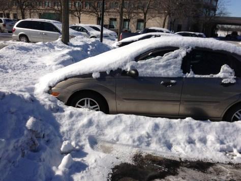 埋在雪裡兩個月的小黃